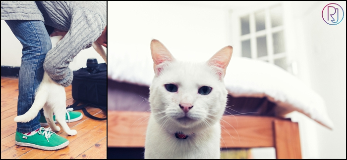 Ruby-Jean-Pet-Photography-Cats-CapeTown-Photographer-0004