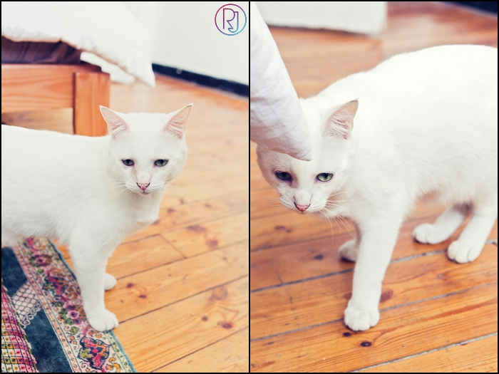 Ruby-Jean-Pet-Photography-Cats-CapeTown-Photographer-0005