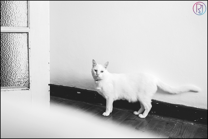 Ruby-Jean-Pet-Photography-Cats-CapeTown-Photographer-0006