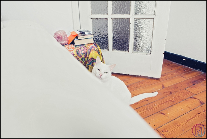 Ruby-Jean-Pet-Photography-Cats-CapeTown-Photographer-0009
