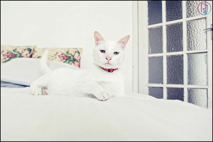 Ruby-Jean-Pet-Photography-Cats-CapeTown-Photographer-0010
