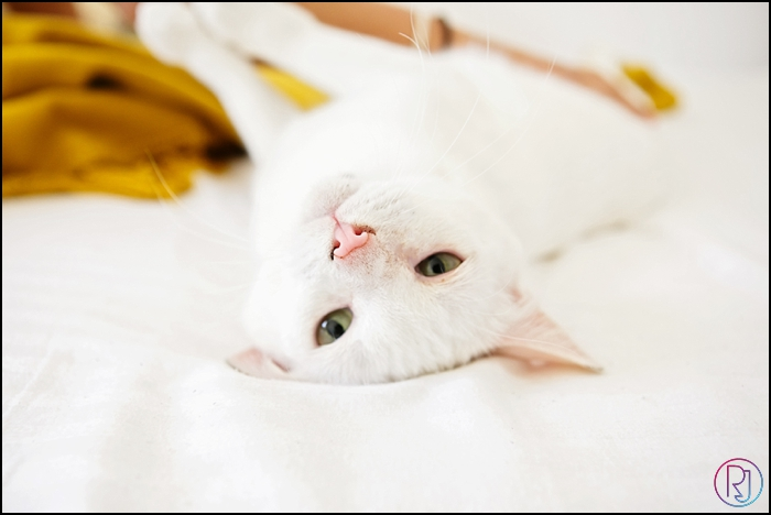 Ruby-Jean-Pet-Photography-Cats-CapeTown-Photographer-0034