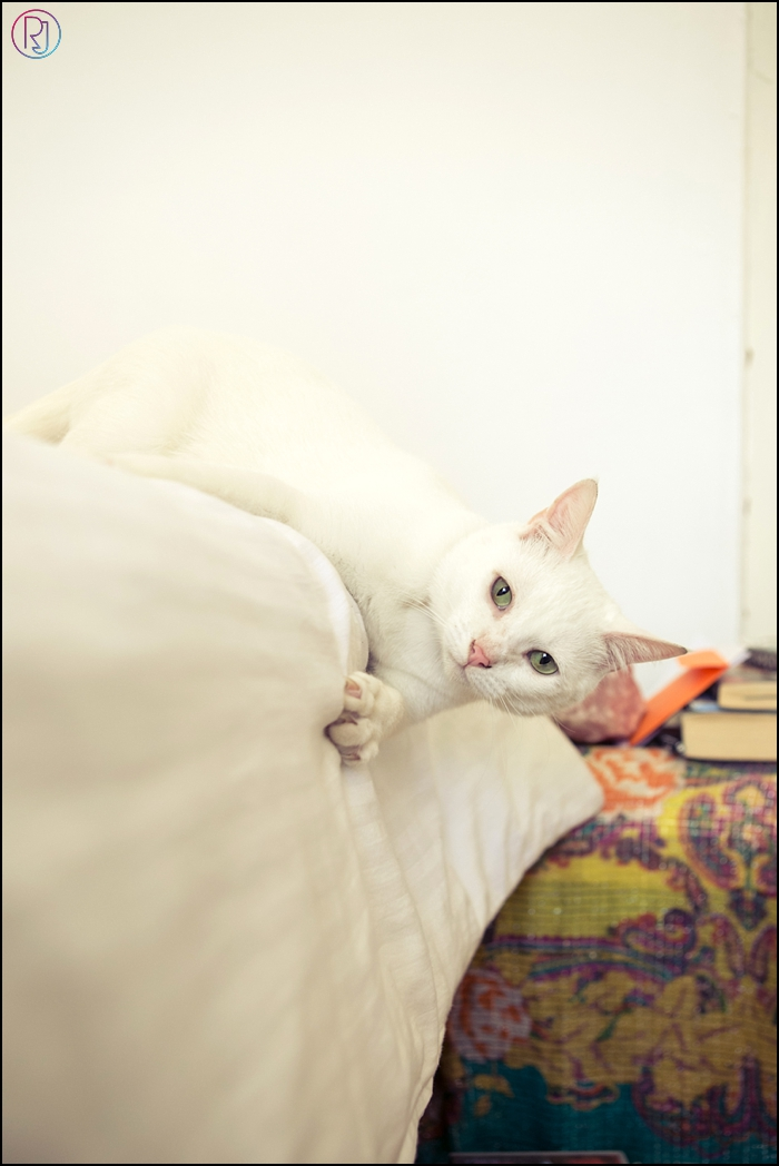 Ruby-Jean-Pet-Photography-Cats-CapeTown-Photographer-0035