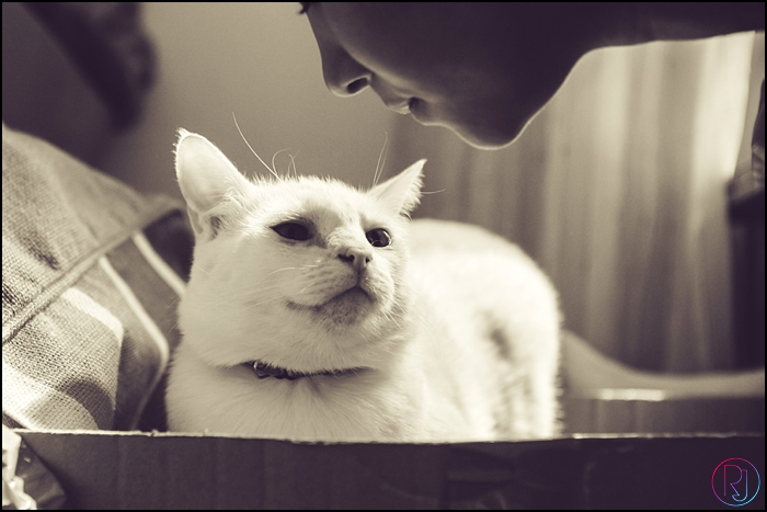 Ruby-Jean-Pet-Photography-Cats-CapeTown-Photographer-0040