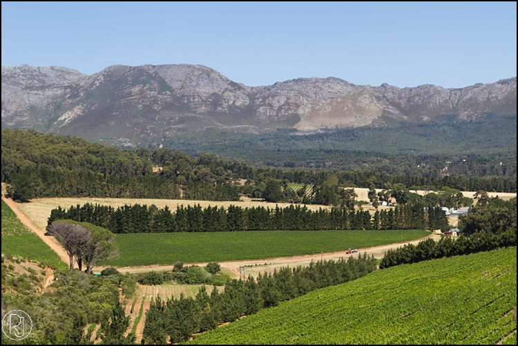 Ruby-Jean-Photography-Highberry-Waterkloof-Estate-J&L-713