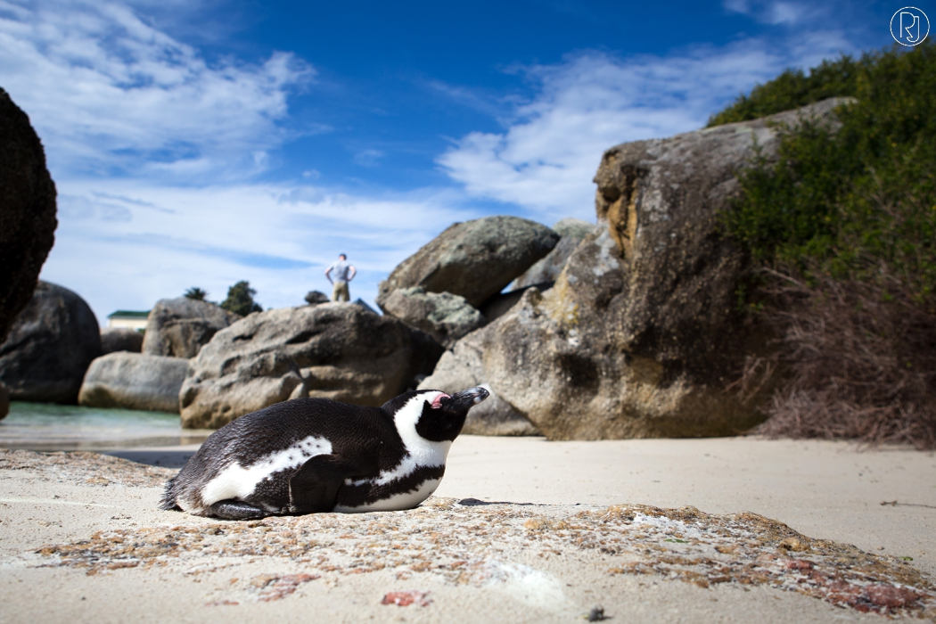 RubyJean_Photography-Travel_South_Africa_Cape_Town-S&K-039