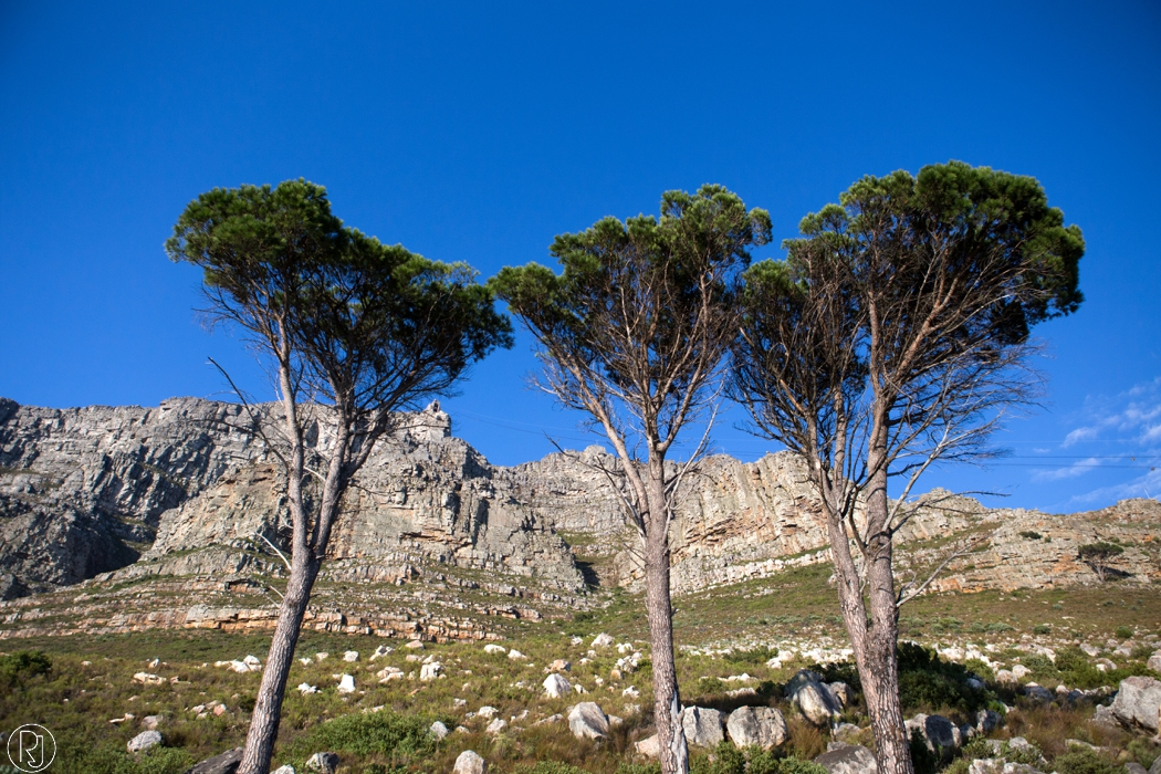RubyJean_Photography-Travel_South_Africa_Cape_Town-S&K-068