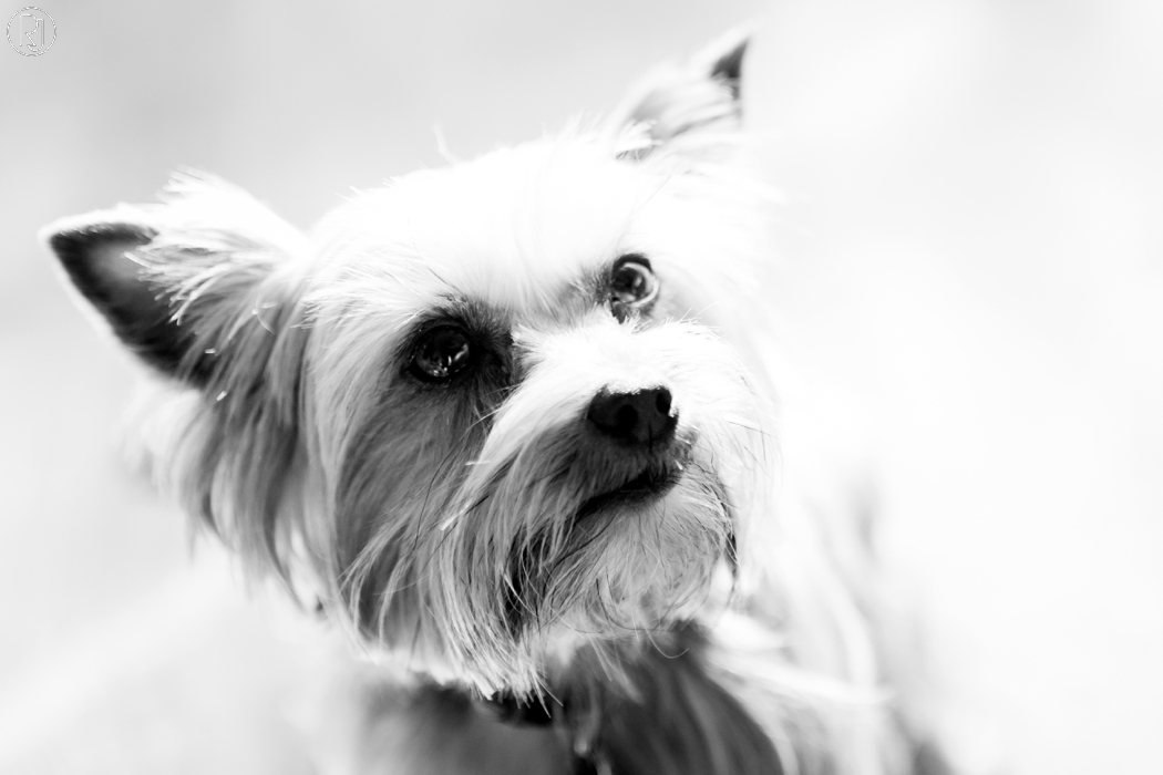 RubyJean_Photography-Paw_Pixels-Pet_Photography-Jess-012