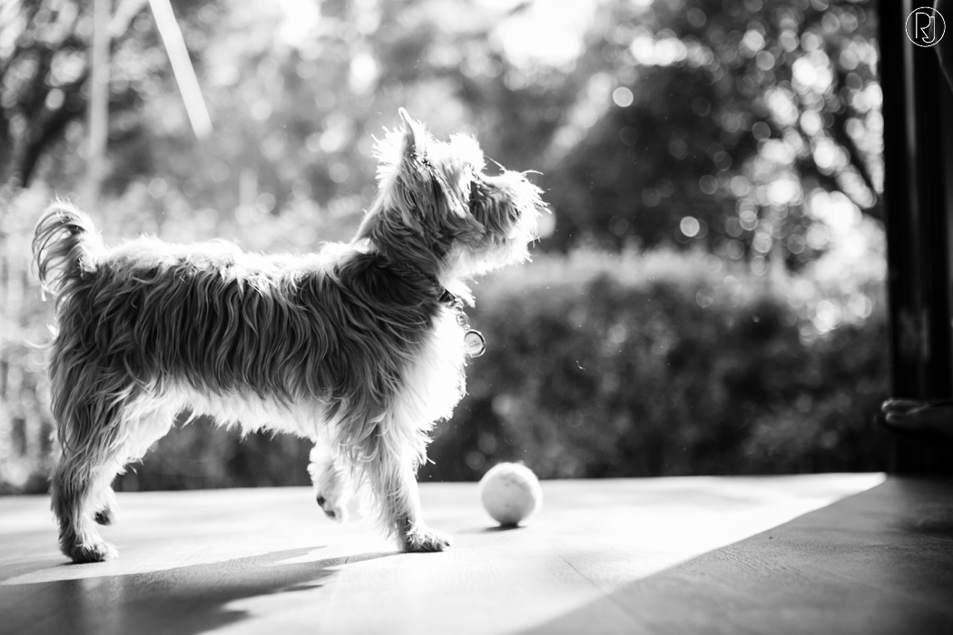 RubyJean_Photography-Paw_Pixels-Pet_Photography-Jess-014