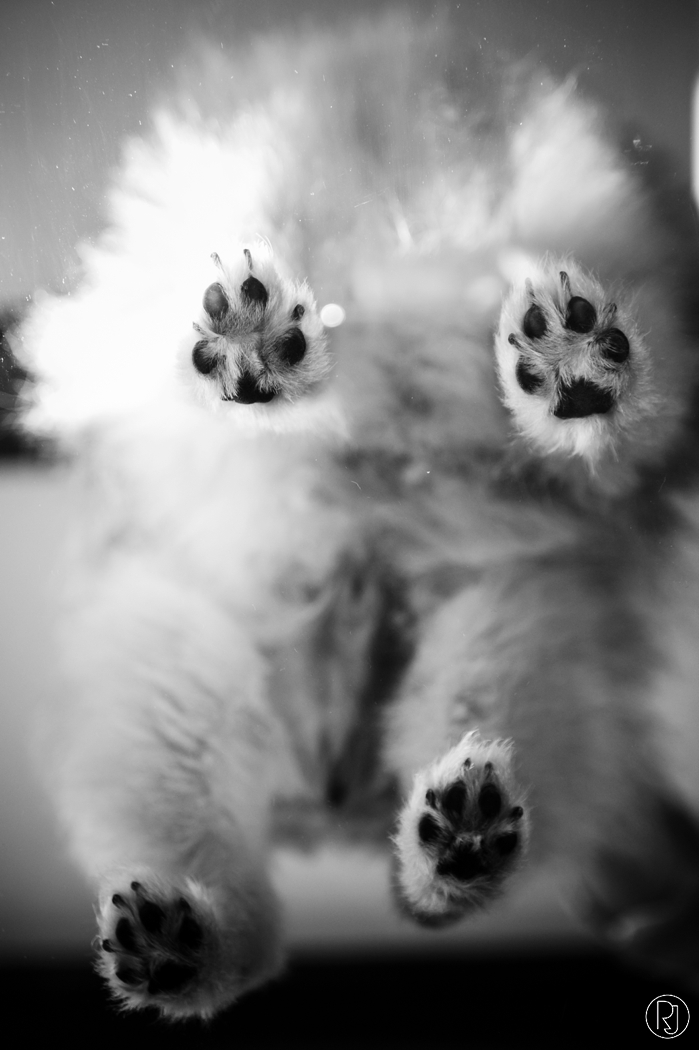 RubyJean_Photography-Paw_Pixels-Pet_Photography-Jess-025