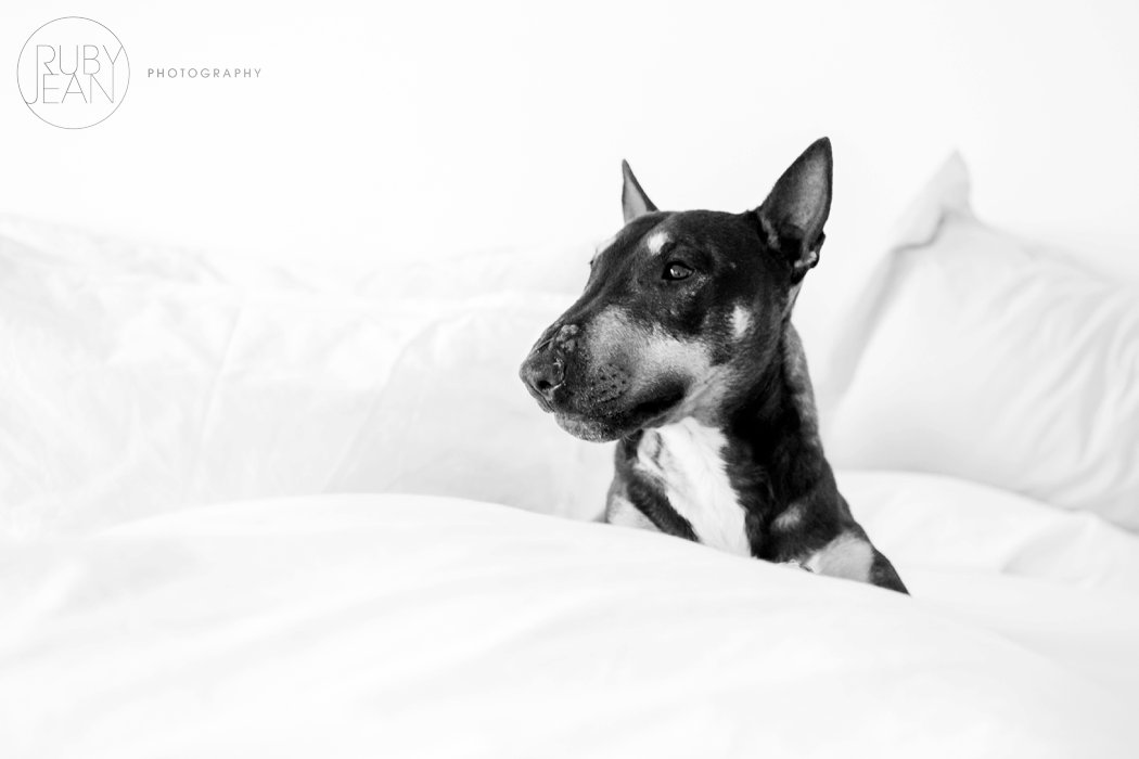 rubyjean-pet_photography-onyx-020