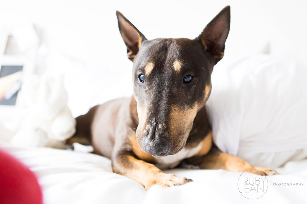 rubyjean-pet_photography-onyx-026