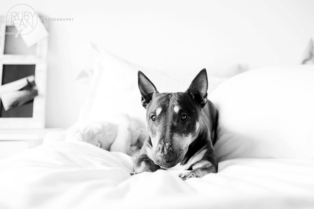 rubyjean-pet_photography-onyx-030