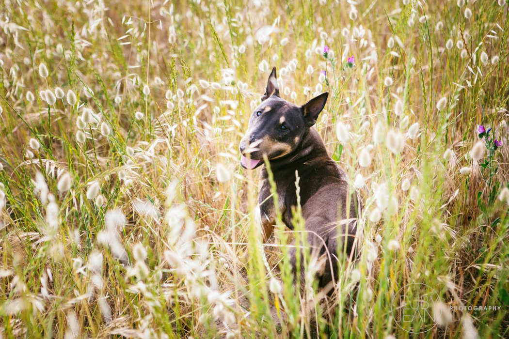 rubyjean-pet_photography-onyx-047