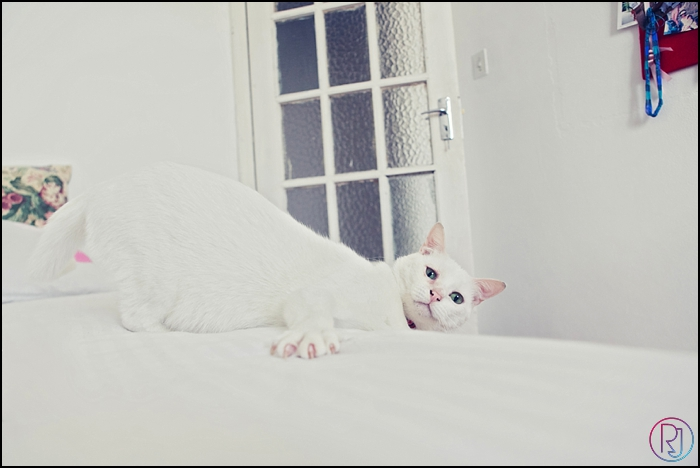 Ruby-Jean-Pet-Photography-Cats-CapeTown-Photographer-0011