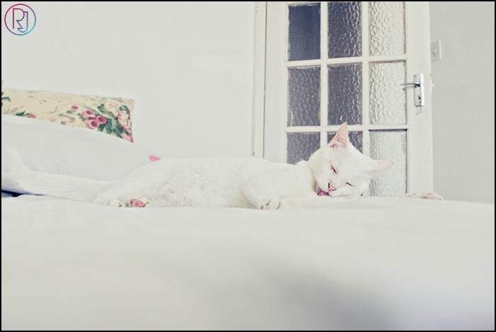 Ruby-Jean-Pet-Photography-Cats-CapeTown-Photographer-0012