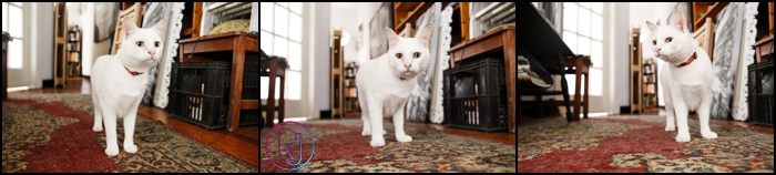 Ruby-Jean-Pet-Photography-Cats-CapeTown-Photographer-0020