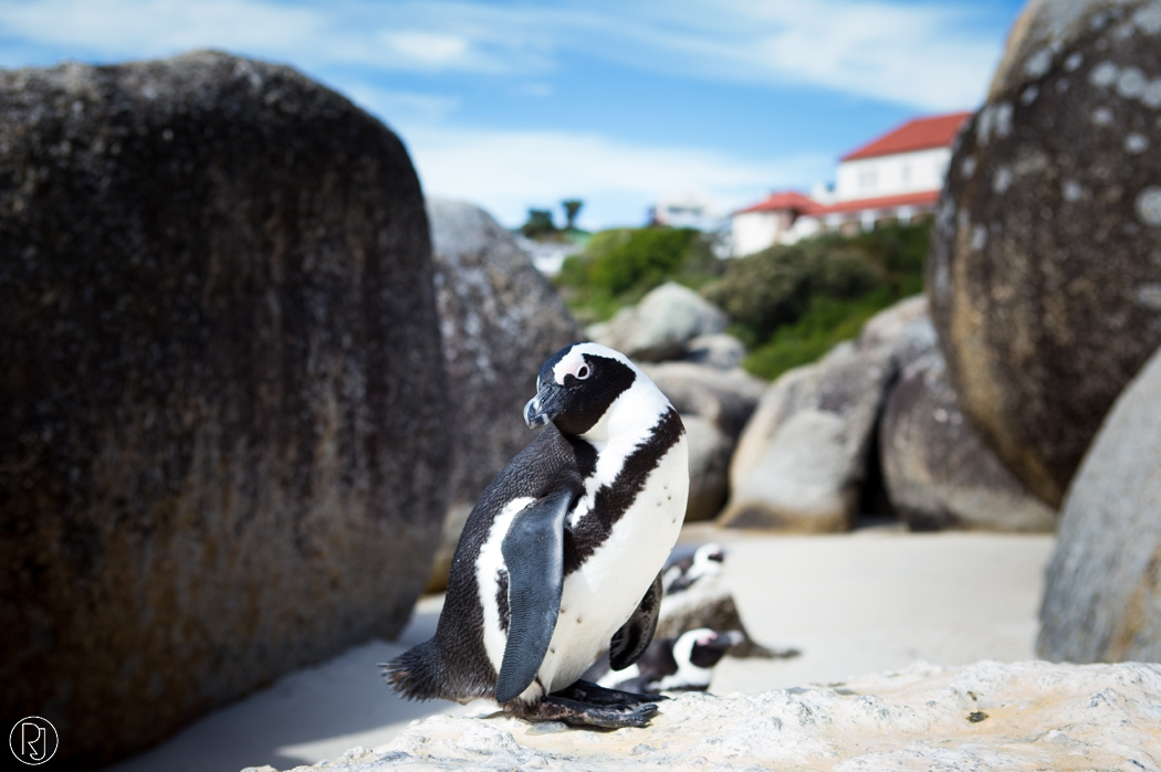 RubyJean_Photography-Travel_South_Africa_Cape_Town-S&K-043