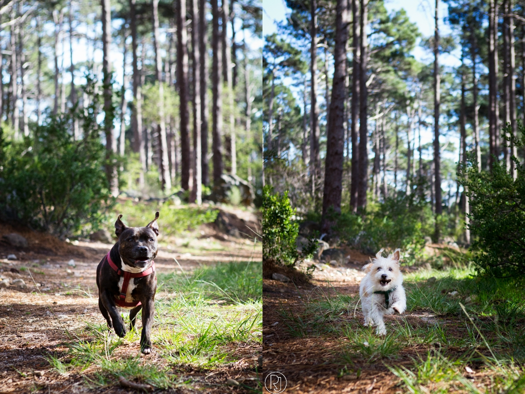 RubyJean_Photography-deer_paek_pet_photography_cape_town-012