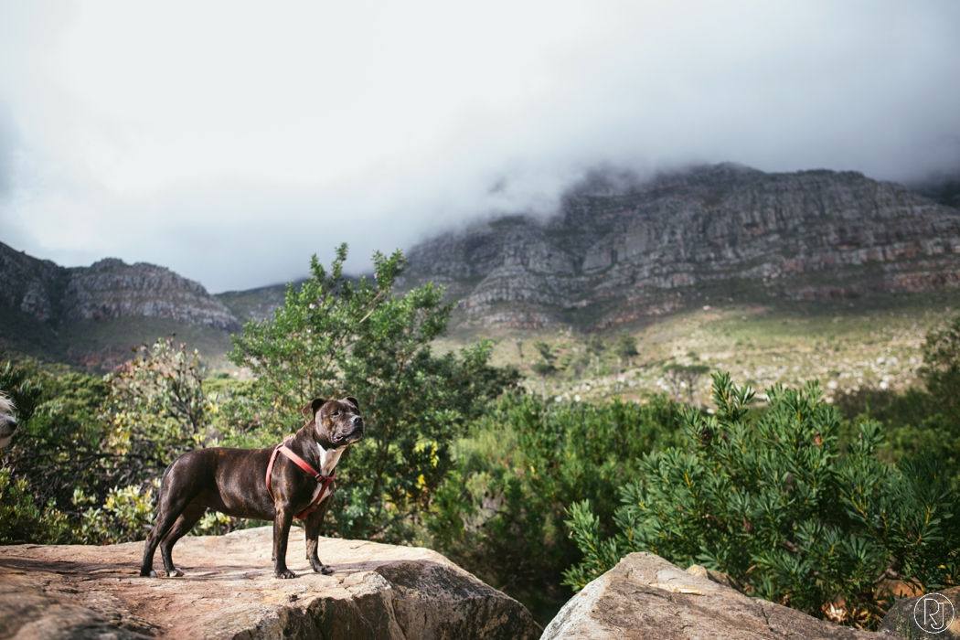 RubyJean_Photography-deer_paek_pet_photography_cape_town-024
