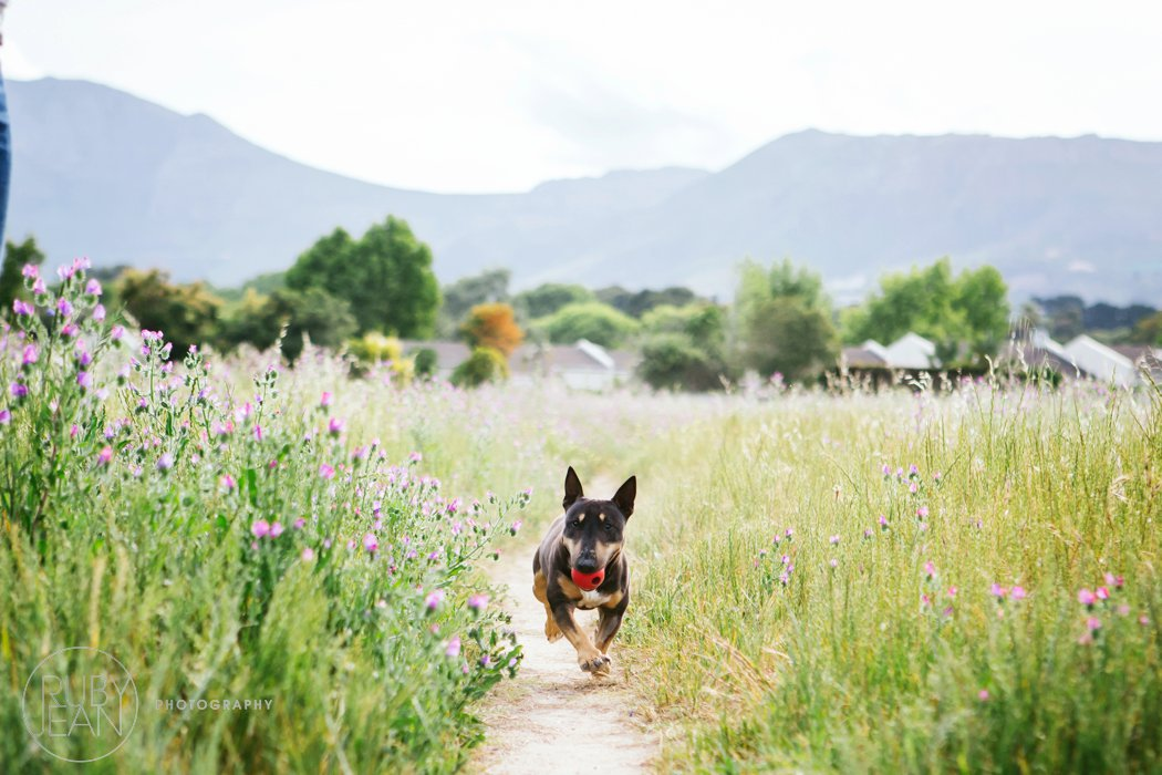 rubyjean-pet_photography-onyx-060