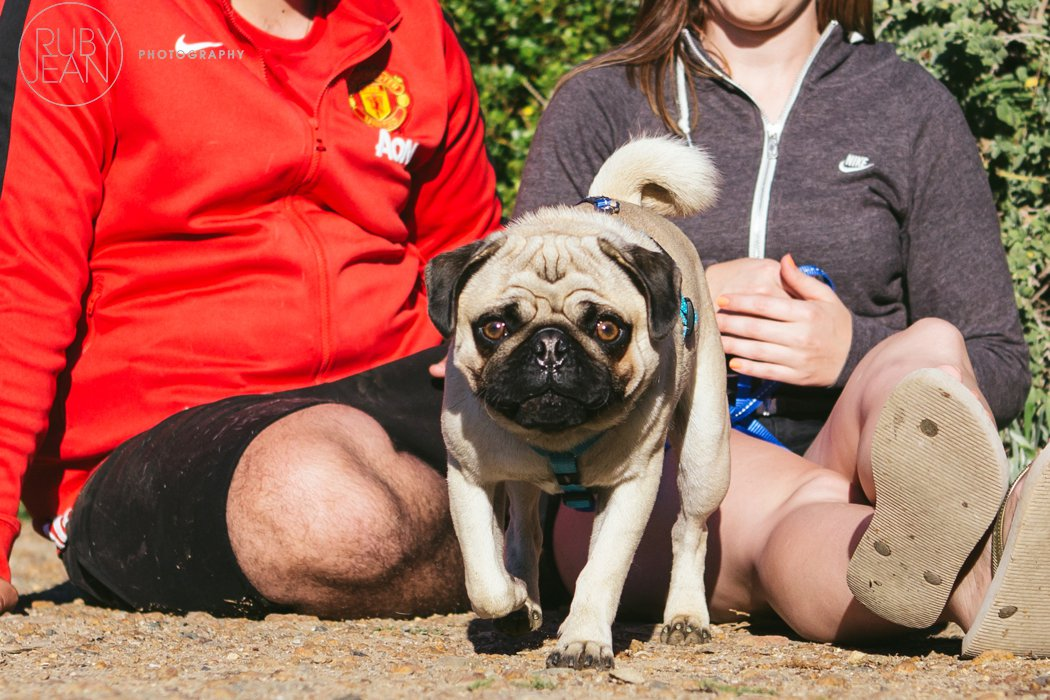 rubyjean-pug_dog_photography-kenny-024