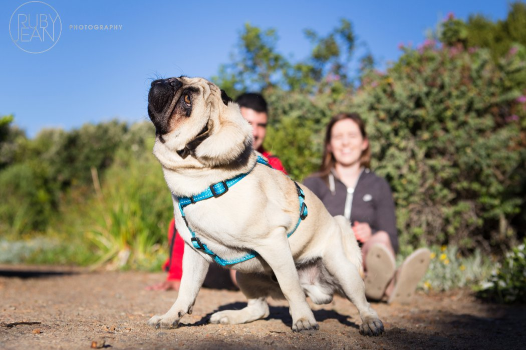 rubyjean-pug_dog_photography-kenny-026