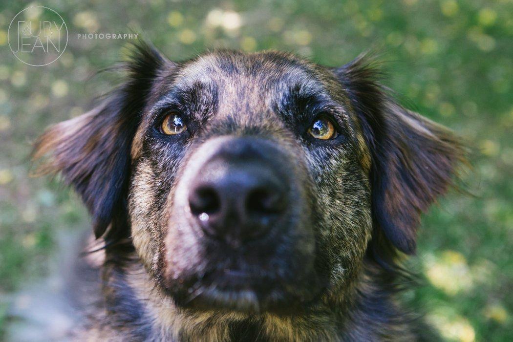 rubyjean_photography_christmas-pet_portraits-teddy-002