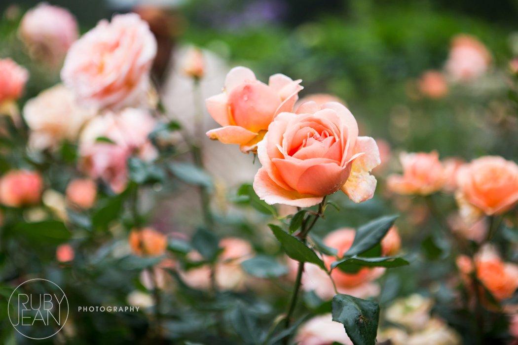 rubyjean_photography_top_billing_wedding_pascalsarah-003